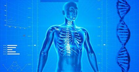 human-skeleton-163715_960_720
